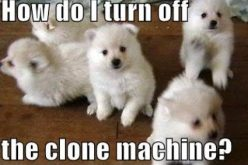 snuppy the 1st clone dog RE CLONED! and why? could human cloning be far off?